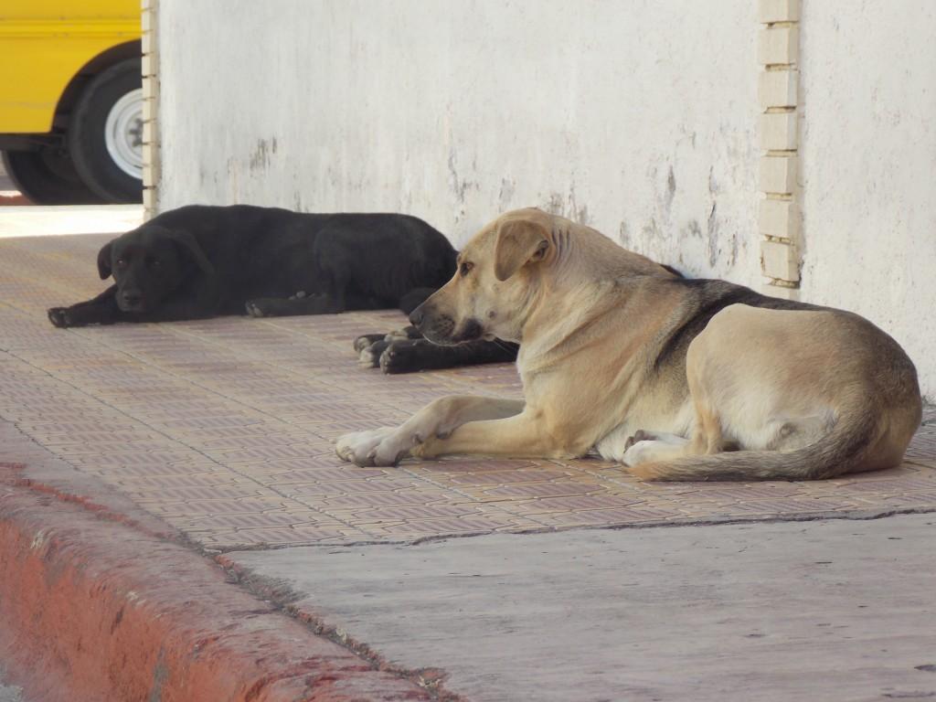 Esperan vecinos que el centro de control canino disminuya perros callejeros.