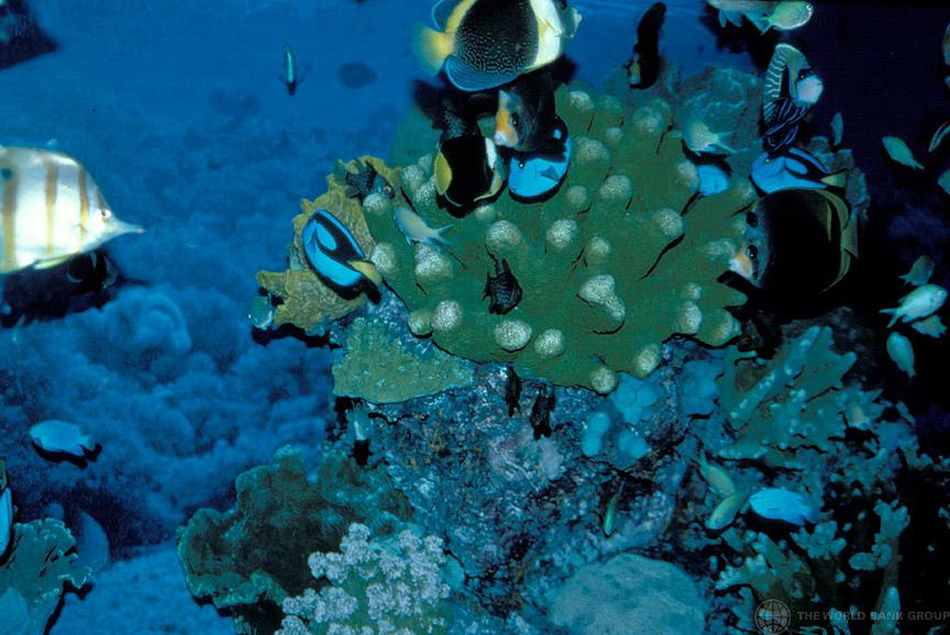 Las maravillas en alta mar, ¿patrimonio mundial?