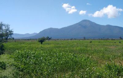 Registra el campo saltillense beneficios por lluvias (1)