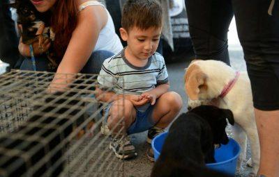 es-este-domingo-la-feria-de-adopcion-de-mascotas2