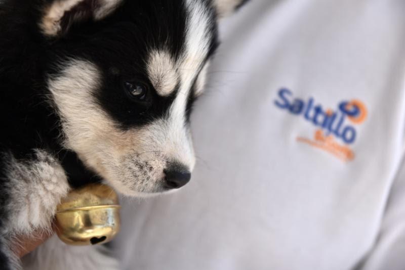 Más de 6 mil perros y gatos se inmunizarán contra la rabia