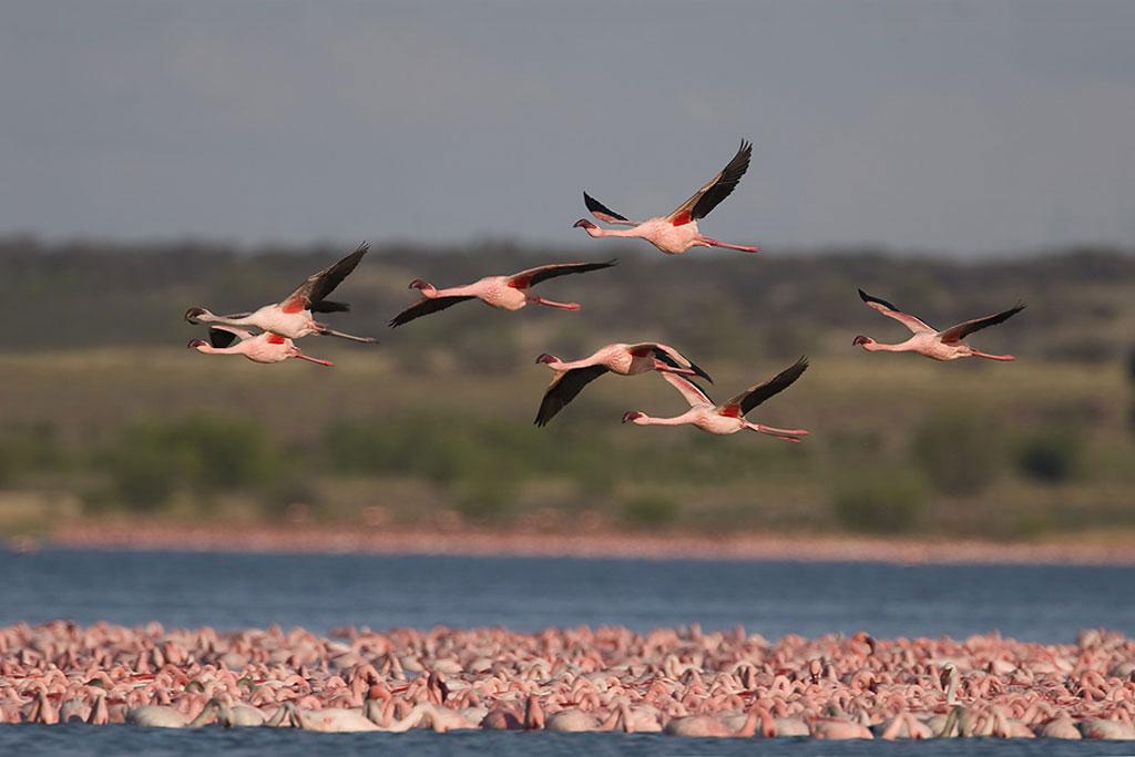 Señalan que la población de aves migratorias desciende drásticamente
