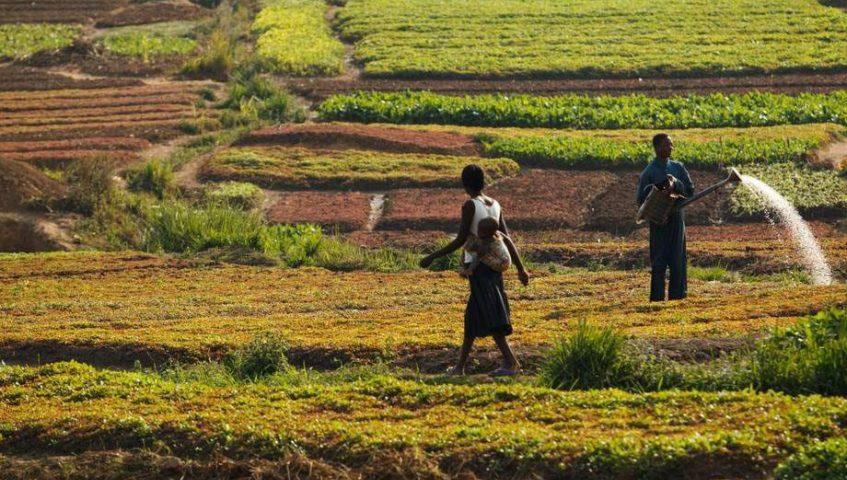 Venezuela registró mayor alza en subalimentación en la región — FAO